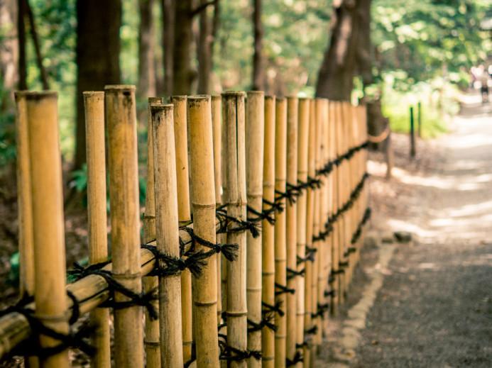 Bamboo Fence in Yoyogi Park