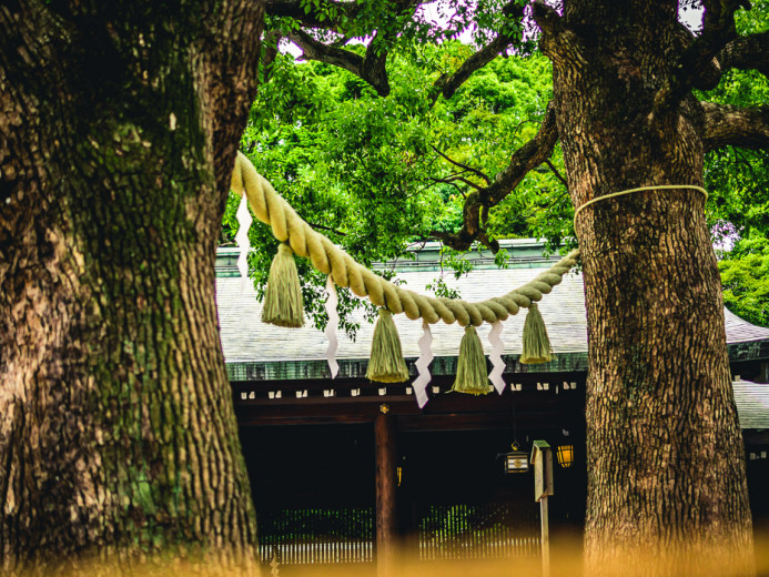 Meiji Jingu Tree