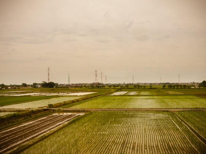 Fields of Rice