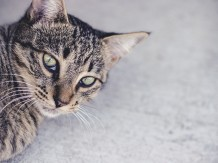 Milo Staring